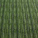 Jersey Birkenstämme grün