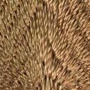 Applikation Dreieck Farbe.975 brandy  VENO